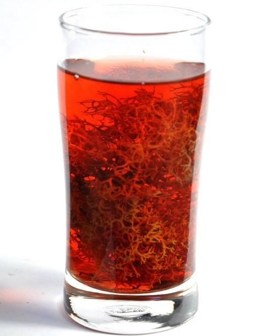 Red snow tea Lethariella cladonioide 1