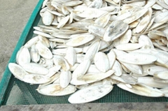 OFFER Cuttlefish bone.pls contact me via