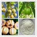 Garcinia Cambogia Extract Hydroxy Citric