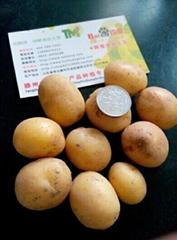 供應小土豆