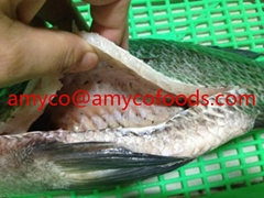 Tilapia fish from professional tilapia producer in China