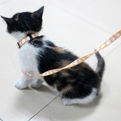 定制猫项圈