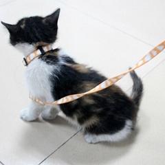 Custom made cat collar