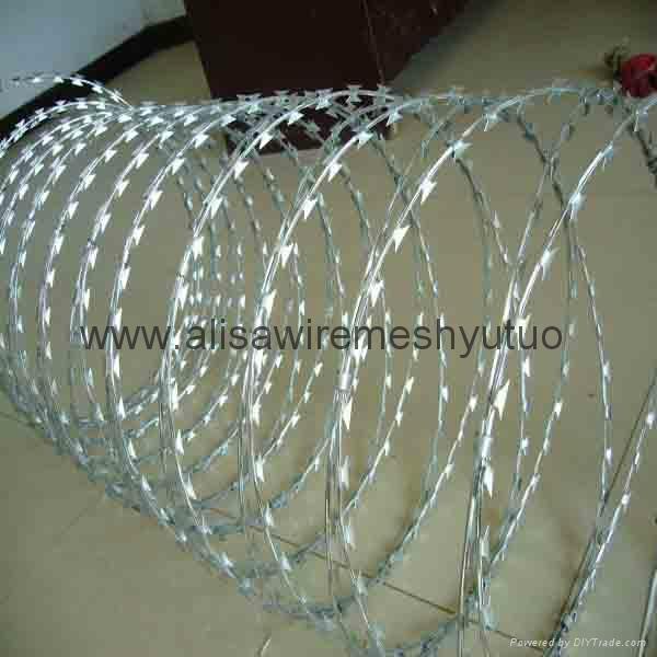 bto-22, 450mm epoxy and ga  anized razor wire for sale 3