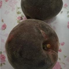 新品种桃树苗_黑桃_黑桃新品种