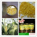 Canned Vegetable Canned Sweet Corn 340g*24tins 4