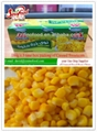 Canned Vegetable Canned Sweet Corn 340g*24tins 2
