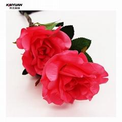Ourdoor beautiful light rose flower light