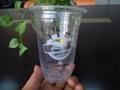 广东塑料杯 2