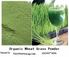 Super Green Wheat Grass Powder Factory Direct Sale