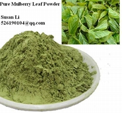 100% Pure High Quality Mulberry Leaf