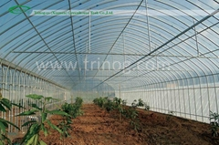 Economical Plastic Vegetables Greenhouse