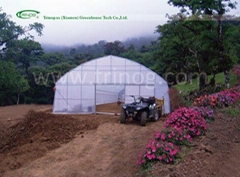 Economical Tunnel Film Greenhouse