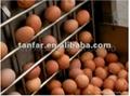 天發自動熟雞蛋脫殼機