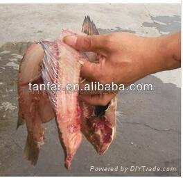 中型鱼类切割机(鱼开肚去主骨再开两片) 5