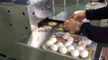 簡易型雞蛋重量分級機 TF-40 18