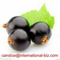 Blackcurrant Extract