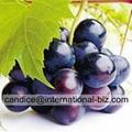 Grape Skin Extract