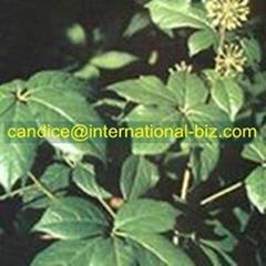Siberian Ginseng Extract