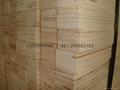 杨木LVL单板层积材 1