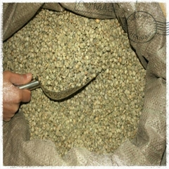 Crop 2014 washed arabica coffee bean