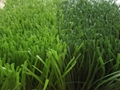 FIFA quality best performance artificial sports turf for soccer field 1