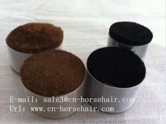 horse body hair  1