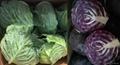 卷心菜、包菜