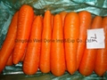 保鲜胡萝卜 3