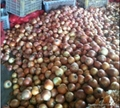 non-peeled fresh onion chinese