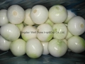 peeled fresh yellow onion 1