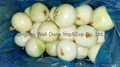 peeled fresh yellow onion 2