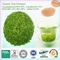 green tea extract and s