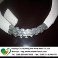 China manufacturer ga  anised razor barbed wire 3