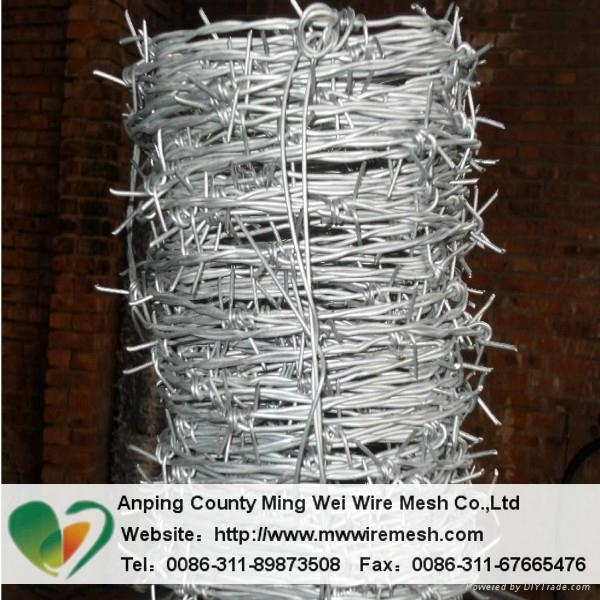 Best Barbed wire ga  anized barbed wire