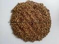 boiled buckwheat kernels