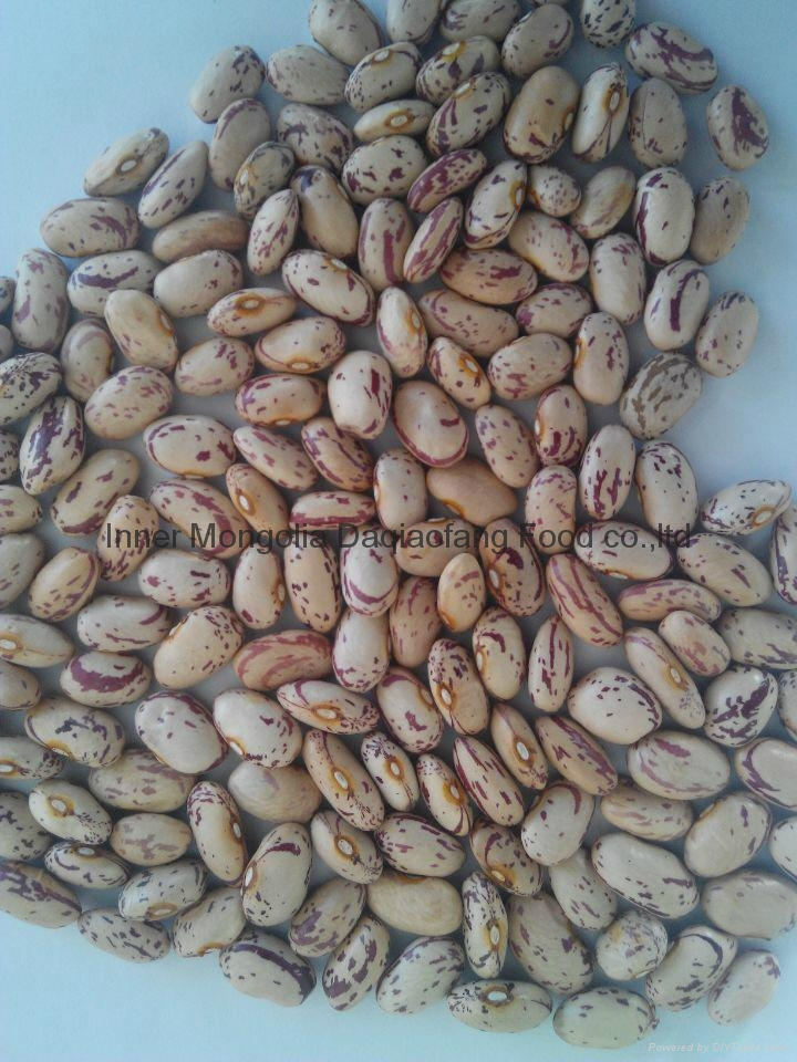 Light Speckled kidney beans(American round) 2