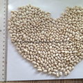White kidney beans (Japan type) 1