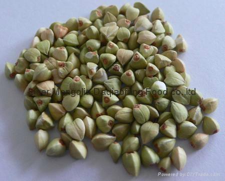 Buckwheat Kernels 1