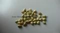 Buckwheat Kernels 3