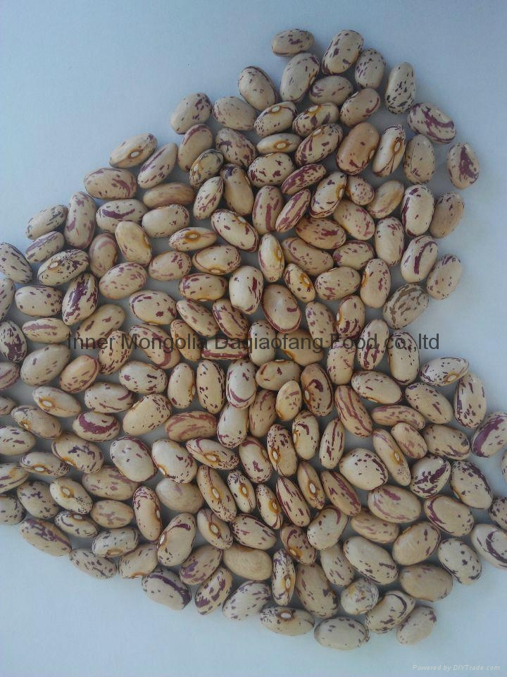 Light Speckled kidney beans(American round) 5