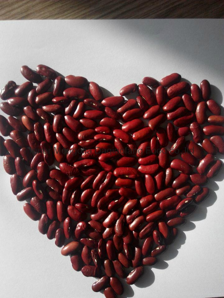 Dark red Kidney beans 2