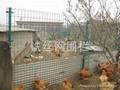 散养鸡场网围栏
