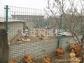 散養雞場網圍欄
