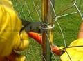 菱形鐵絲網 機編鍍鋅網 2