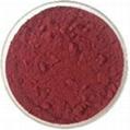 Medlar pigment
