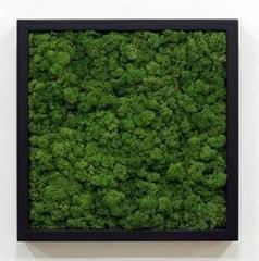 Organic Air Freshener FRAMO:[BL-54]