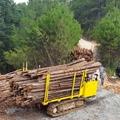 Multi-function wood truck transporter 9