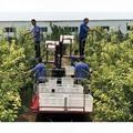 厂家直销园林收货修剪液压履带搬运车自走式果园套袋采摘升降平台 3
