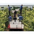 Garden self-walking truck  Orchard Bagging Picking Lifting Platform
